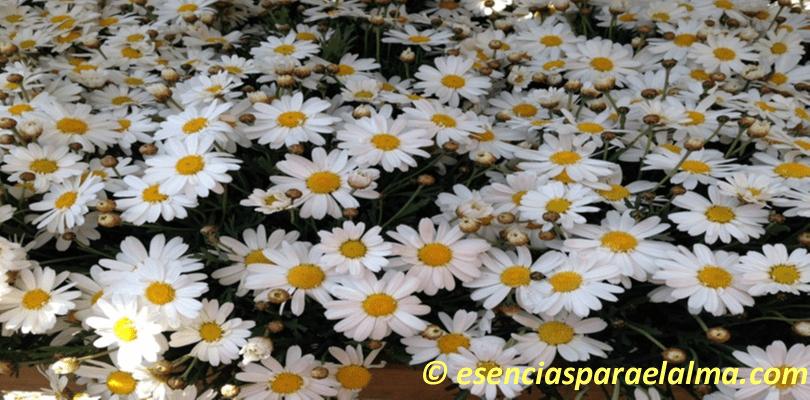 Esta-primavera-tendrás-el-poder-de-cambiar-tu-vida-concha-suárez-esencias-para-el-alma